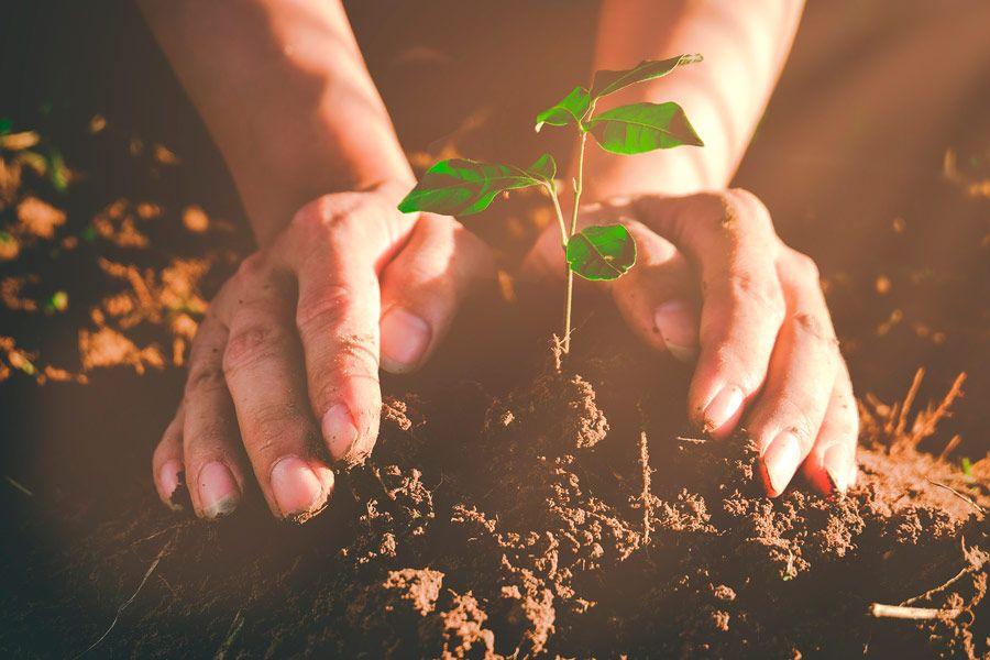 Bioplásticos en la economía circular